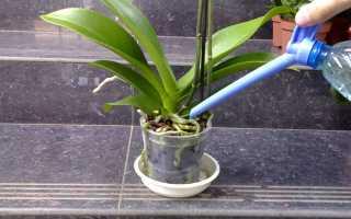 Полив орхидей во время цветения – 4 метода и их особенности + Видео