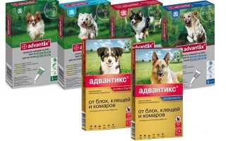 Адвантикс для собак: инструкция и цена, аналоги, отзывы