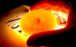 Овоскопирование куриных яиц: особенности процесса, фото и видео