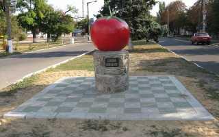 Ягода или овощ помидор?