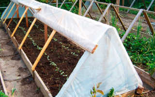 Как сделать парник на даче для рассады, огурцов своими руками + фото, чертежи