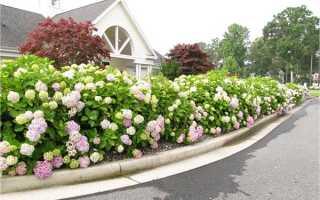 Вертикальное озеленение в ландшафтном дизайне, подбор растений с фото и названиями