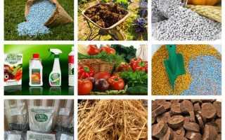Что такое удобрение — какие бывают, когда и как применяются