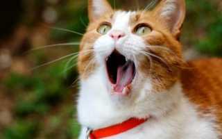 Как приучить кота к унитазу, ходить его на человеческий туалет после лотка, как кошки вообще