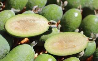 Фейхоа фрукт: фото, свойства и рецепты как есть