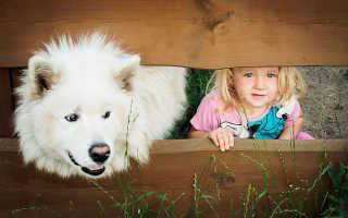 Как подружить собаку с собакой и избежать конфликтов