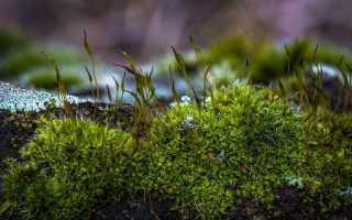 Описание декоративного мха как ценного растения для ландшафтных дизайнеров, методы его выращивания и ухода