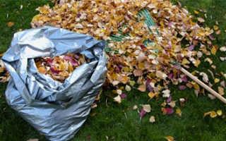 Опавшие листья как удобрение: как использовать правильно