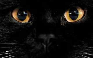 Что значит, если кошки смотрят в глаза человеку, и почему котам нельзя смотреть прямо в