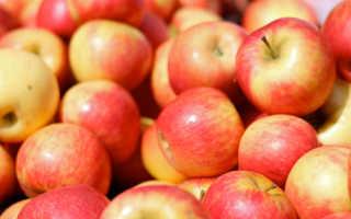 Сорт яблони Хани крисп, описание, характеристика и отзывы, а также особенности выращивания данного сорта