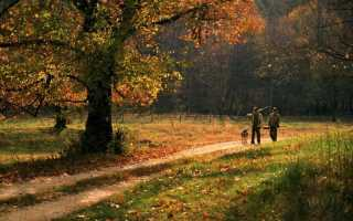 Сроки охоты в Тульской области
