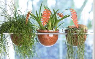 Серамис — гранулят и удобрения для легкого выращивания растений