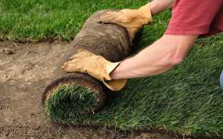 Газонная трава в рулонах и семенами: сравнение, как сажать, как укладывать
