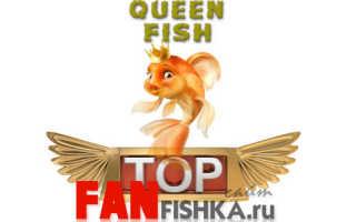 Красивые аквариумные рыбки: фото, самые лучшие в аквариуме, яркие, интересные, пресноводные
