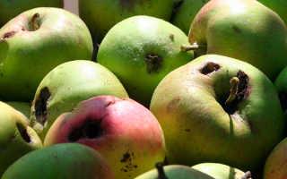 Эффективные методы борьбы с плодожоркой на яблоне