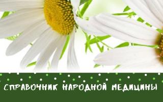 Трава чистотел: лечение и противопоказания, фото, лечебные свойства, как принимать чистотел для лечения
