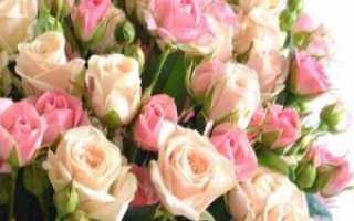 Ботанические особенности кустовых роз: правила посадки и ухода за растениями