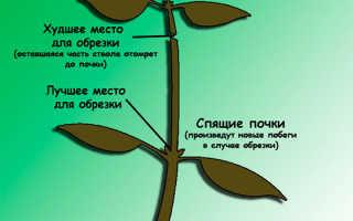 Что такое прищипка растений: особенности проведения процесса и его основные характеристики, когда следует проводить прищипывание