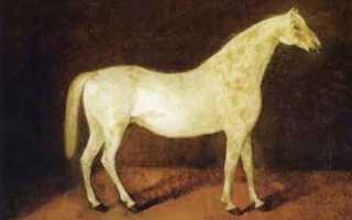 Самая дорогая лошадь в мире: порода, цена, владелец
