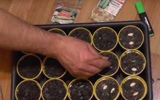 Как вырастить кабачки: способы посадки, выращивания и дальнейший уход, в том числе на балконе, на