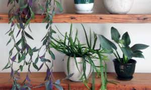 Как садить цветы в кашпо без дырочек — обязательно ли отверстие в цветочном горшке?