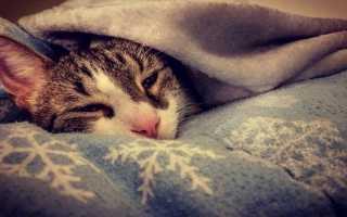 Котенок простыл — 6 симптомов и как лечить