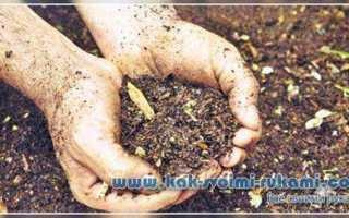 Улучшение глинистой почвы: поэтапная инструкция