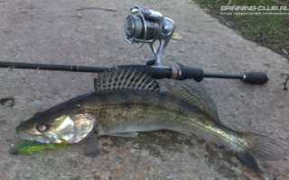 Как ловить судака на спиннинг: секреты и особенности ловли