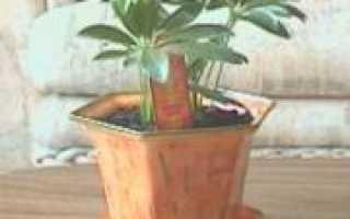 Посуда и инвентарь для комнатных растений и цветов, декорирование горшков