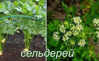 Список 10 двулетних цветущих и плодовых растений: описание, названия и фото