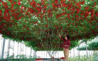 Посадка экзотических растений на огороде: что необычного посадить на даче, как использовать дачную экзотику