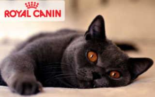 Корм Роял Канин для котят – обзор, советы ветеринара по питанию