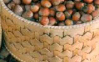 Лещина обыкновенная (орешник): посадка и уход, описание сорта, размножение