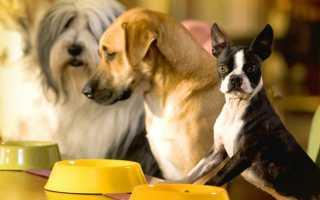 Чем кормить собаку: как правильно и лучше в домашних условиях на натуралке, сколько раз в