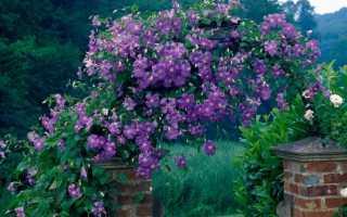 Цветы и растения для вертикального озеленения — подбор сортов