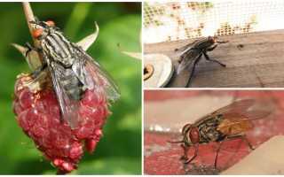 Виды мух — их фото, названия и описание