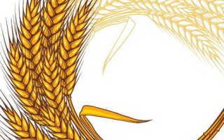 Как нарисовать пшеницу карандашом поэтапно