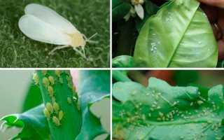 Болезни комнатных растений и как они проявляются, как бороться с вредителями, фото заболевших цветов