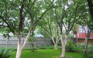 Краска для деревьев садовая — основные правила использования
