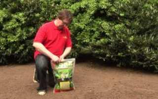 Как правильно выбрать газонную траву для дачи: виды растений для газона, их плюсы и минусы,