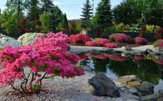 Лиственные деревья и кустарники для сада: фото и названия, какие растения посадить на участке