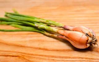 Лук Сорокозубка или посадка и выращивание сорта лука Сорокозубки с фото