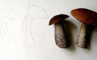 Как нарисовать грибы карандашом и акварелью