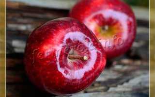 Зимние сорта яблок: фото с названием, описание лучших сладких, ранних, крупных, зеленых и красных, яблони