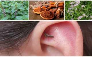 Какой запах отпугивает комаров: описание лучших средств