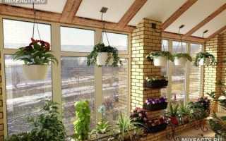 Растения для зимнего сада – учитесь правильно выбирать + Видео
