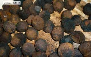 Настойка черного ореха: правила применения и есть ли противопоказания, инструкция по использованию