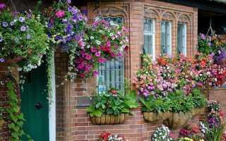 Вертикальное озеленение на даче своими руками — 100 фото идей