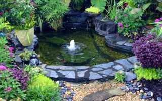 Уход декоративным прудом на участке: как ухаживать за искусственным прудом на даче