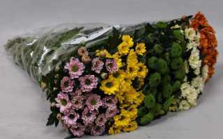 Сантини: мини-хризантема в современном букете